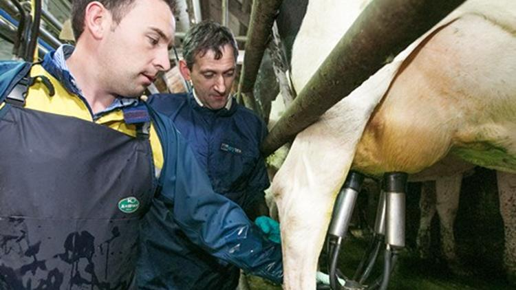 Milking Course